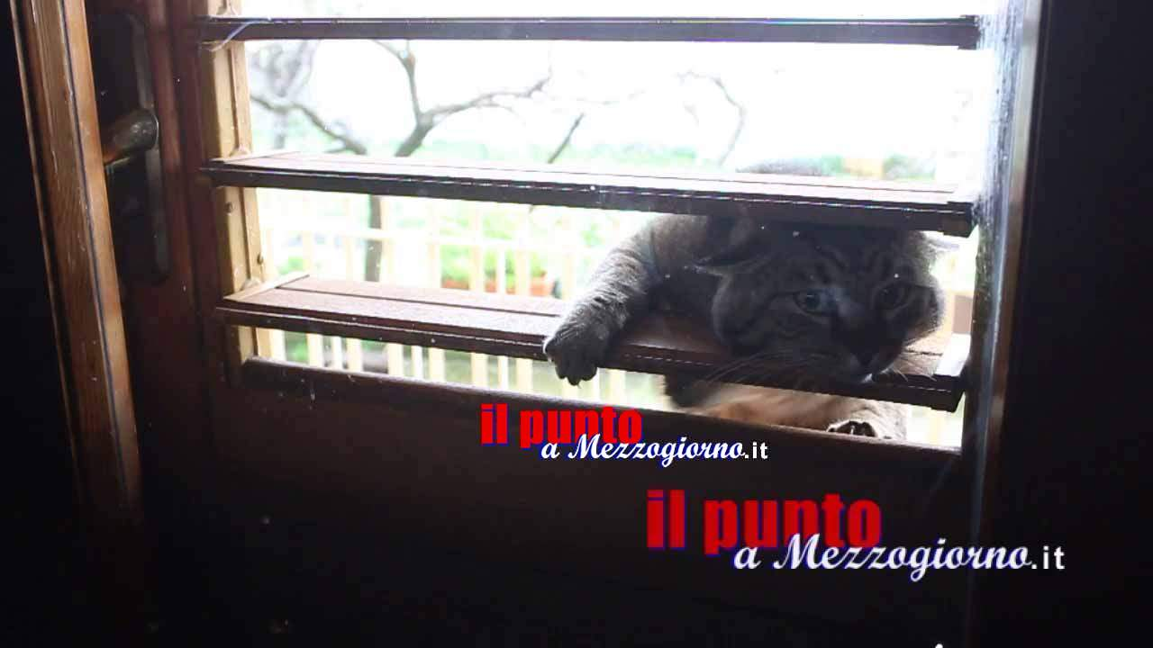 Micitto, il gatto che apre la finestra – guarda il video