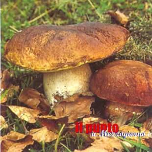 Colto da malore mentre cerca funghi a Priverno, anziano chiede aiuto ma i soccorritori lo trovano morto