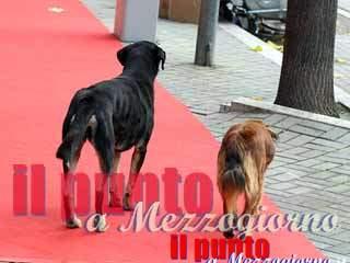 Spara al cane randagio sostenendo di voler salvare la moglie, 59enne denunciato a Casalvieri