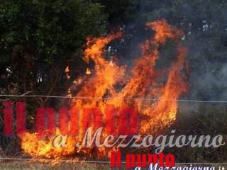 Cassino, ordinanza del sindaco Salera con misure di prevenzione degli incendi boschivi