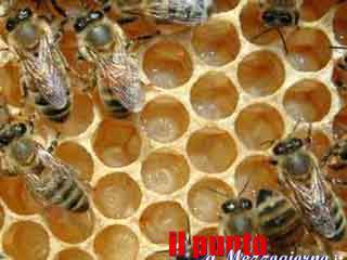 Fa strage di api a Supino, denunciato 66enne