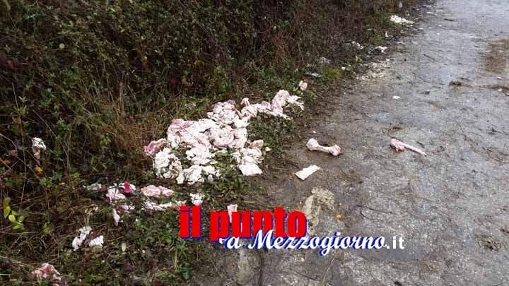 Via Ponte San Lorenzo a Cassino ridotta a discarica, trovate carni di animali macellati