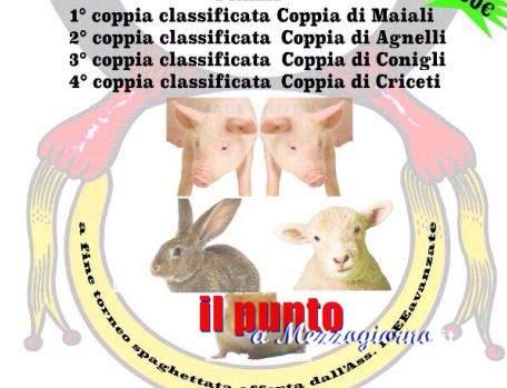Coppia di maiali vivi come primo premio del torneo di briscola a Fontana Liri. E' polemica