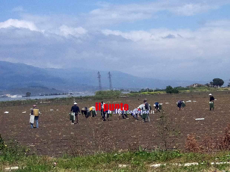 Fondi, denunciati dalla polizia titolare di un panificio e di azienda agricola con lavoratori 'in nero'