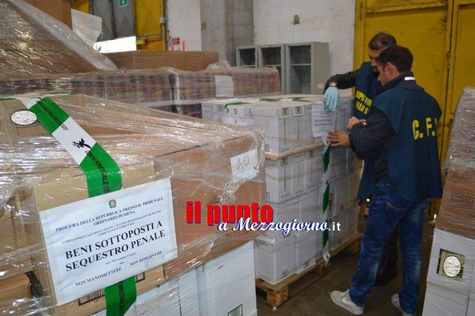 Quattromila bottiglie di olio extravergine di oliva contraffatto sequestrato a Siena