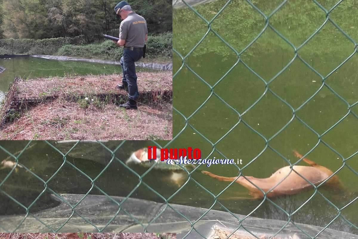 Monte San Giovanni Campano, la polizia provinciale trova animali morti in una ex discarica