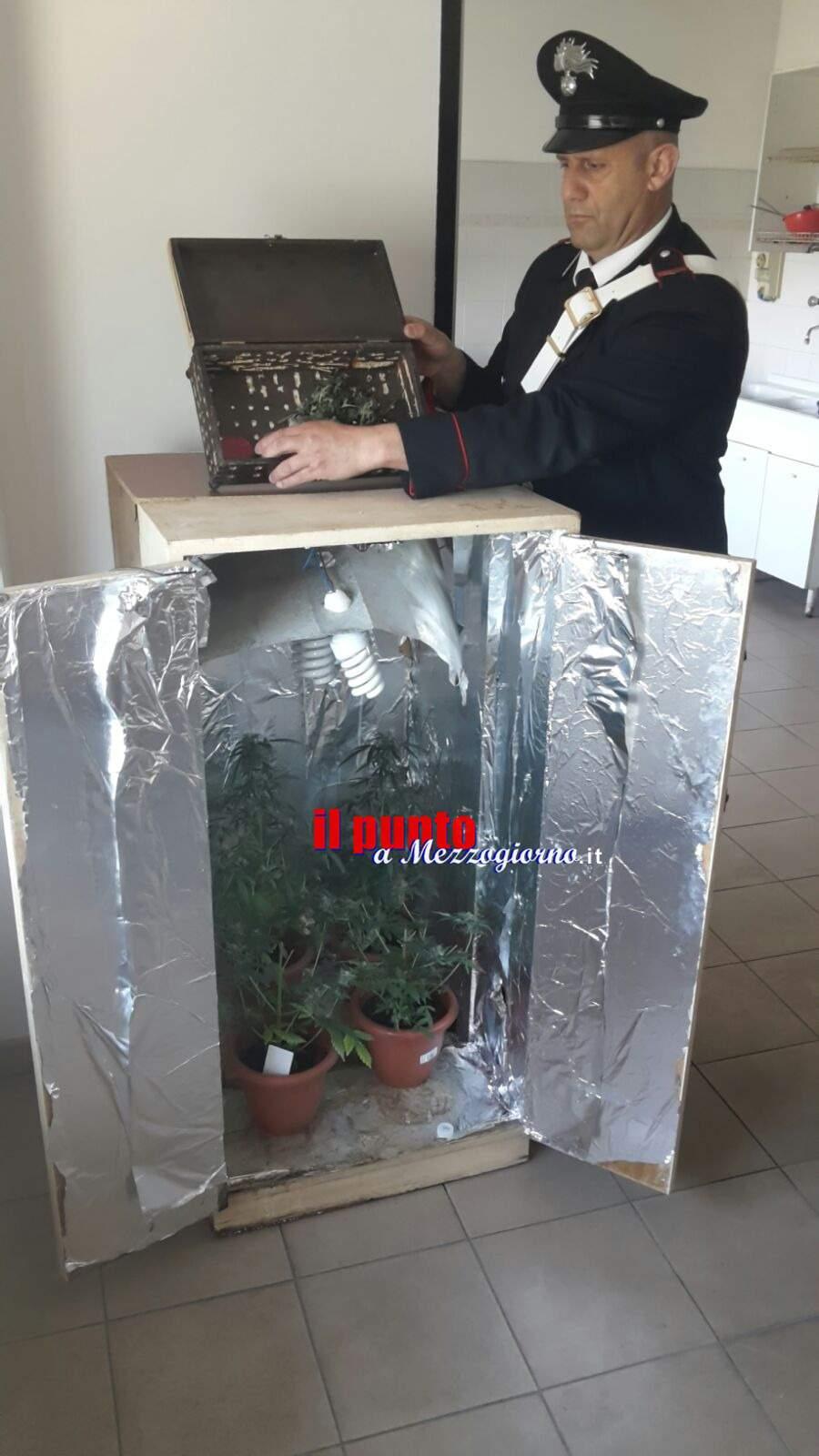 Serra di marijuana in cantina. Due arresti a Piedimonte San Germano