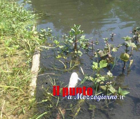 Moria di pesci nel rio Pioppeto a Cassino, informativa in Procura