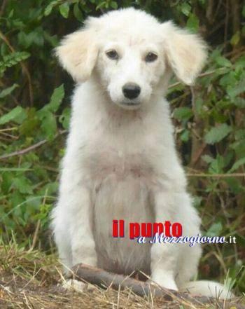 Cani nell'azienda sequestrata a Sant'Elia, grazie all'Anpana si apre un varco (nella vicenda)