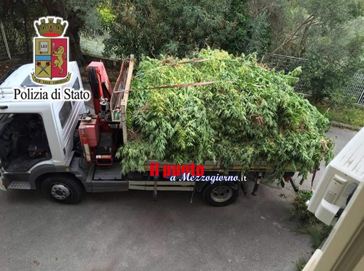 Piantagione di due tonnellate di cannabis sequestrata in un pescheto a Sessa Aurunca – VIDEO