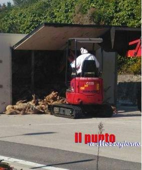 Carcasse sull'asfalto a Broccostella, i vigili del fuoco le rimuovono e bonificano l'area