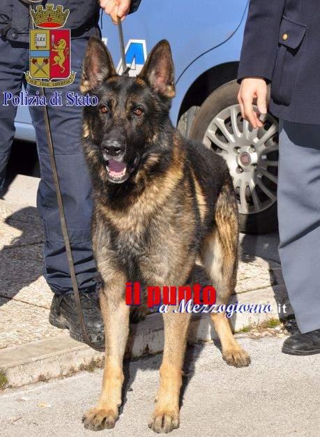 Controlli antidroga durante la movida a Cassino, due giovani segnalati alla Prefettura