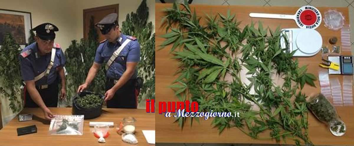 Mignano Montelungo – Campozillone – Coltivavano cannabis, arrestati un 55enne ed un 39enne