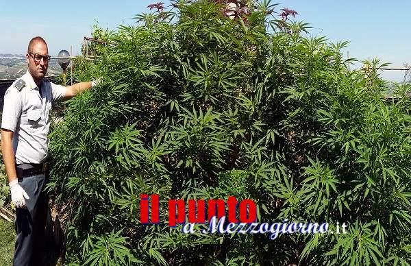 Operazione Shoot della Guardia di Finanza: Sequestro di armi e di piantagione di cannabis indica