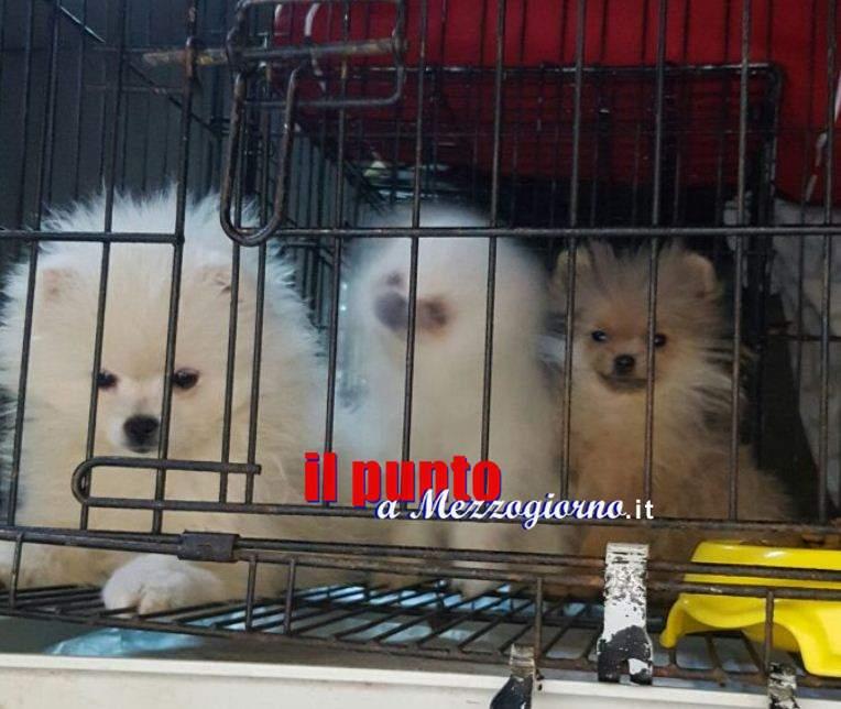 Diciotto cuccioli di cane sequestrati sull'A1 a Frosinone