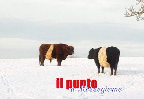 Neve e terremoto ad Amatrice, da Velletri offerta di terreno per pascolo ad allevatori di amatrice allevatori