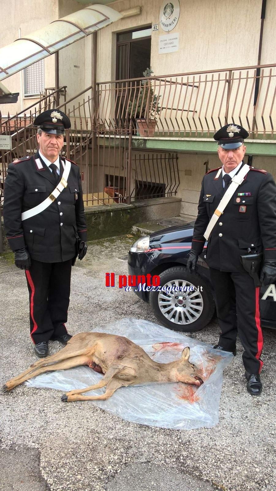 San Vittore del Lazio – Sparano e uccidono un capriolo, denunciati due cacciatori