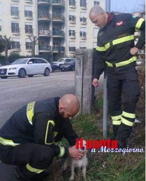 Cade nel Fiume Rapido a Cassino, cucciolo salvato dai vigili del fuoco