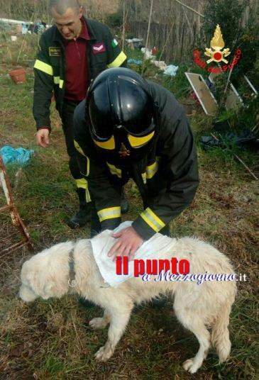 Cane maremmano salvato dai vigili del fuoco a Gaeta