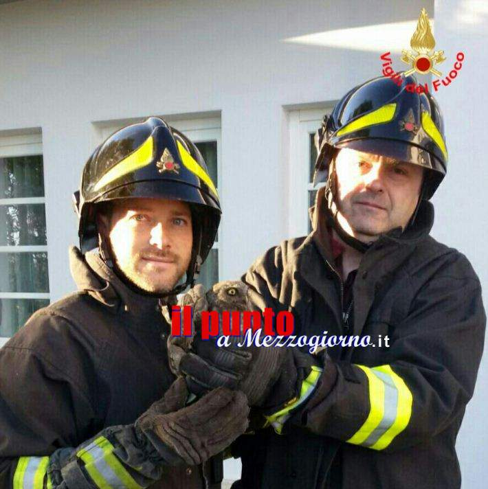 Civetta incastrata, salvata dai vigili del fuoco