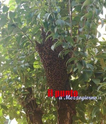 Maxi sciame d'api si parcheggia in vicolo Verdi a Cassino