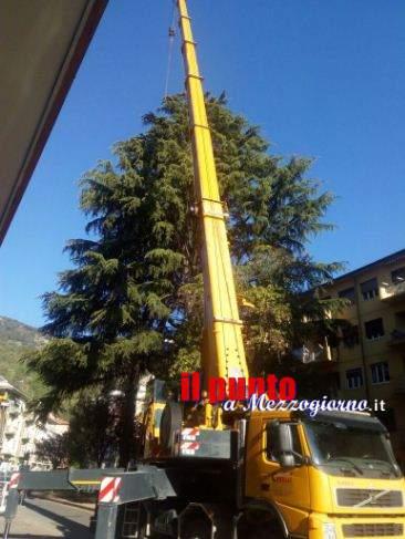 """Giardinieri """"volanti"""" a Cassino per monitorare il grosso abete in piazza Toti"""