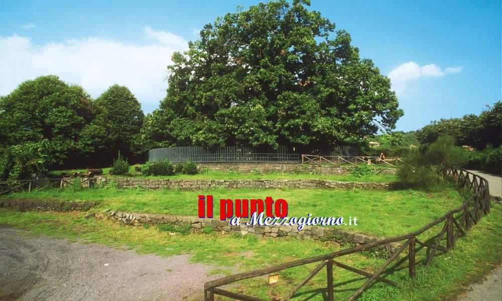 È In Sicilia il Castagno più antico d'Europa, ai piedi dell'Etna da circa 4000 anni