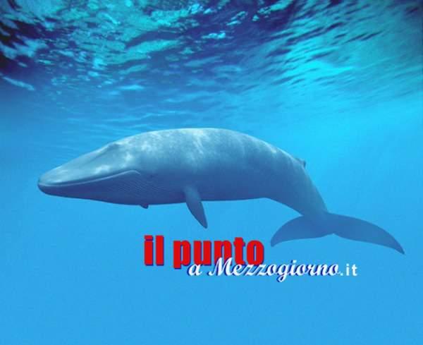 """Blue Whale fa paura anche in Italia. Viaggio nel ventre della """"balena"""""""