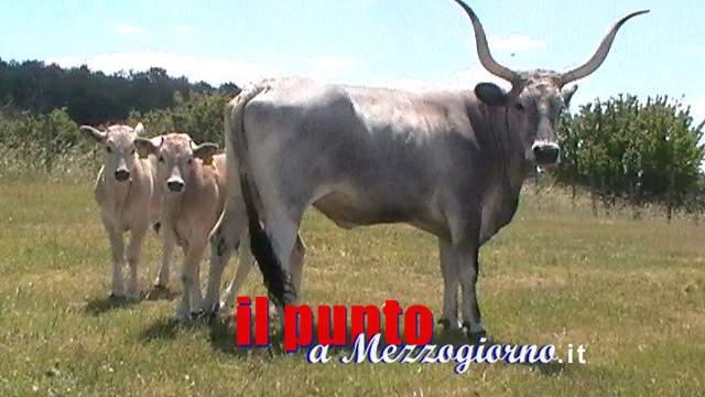 Siccità, veterinari: sos per animali, pascoli a rischio desertificazione nel Lazio