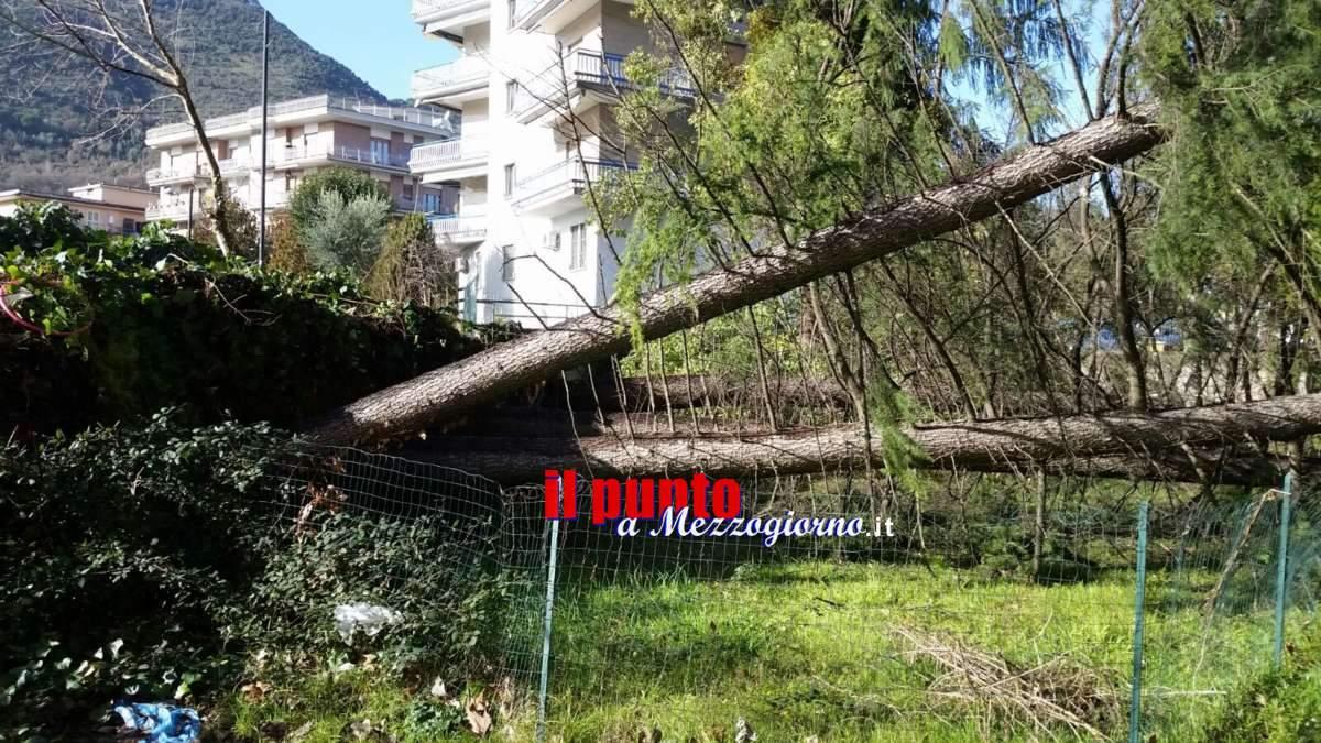 Cassino: Raffiche di vento, disagi e alberi caduti