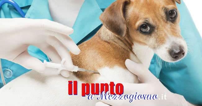 Domenica 4 febbraio, microchip gratuito dei propri animali