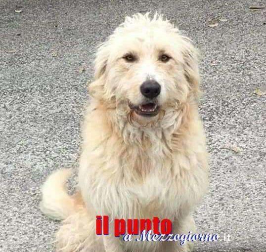 Morte del cane Neve, il sindaco di Cervaro in procura per denunciare gli insulti