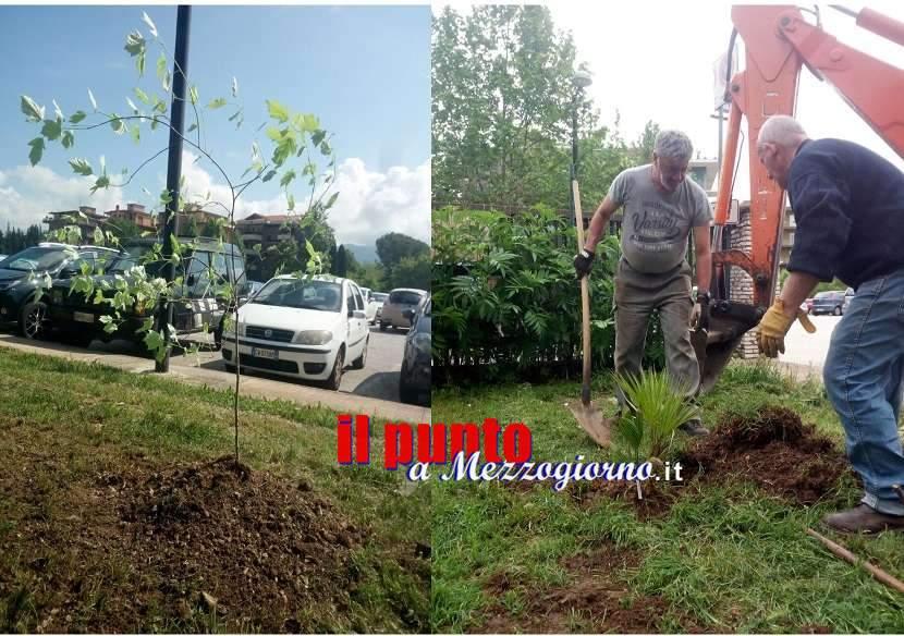 Cassino, iniziata da campo Miranda la piantumazione di nuovi alberi