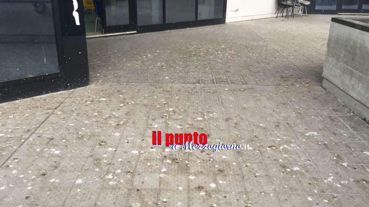 Polo Universitario della Folcara; il terrazzo del bar coperto di escrementi di volatili. Rischio igienico-sanitario