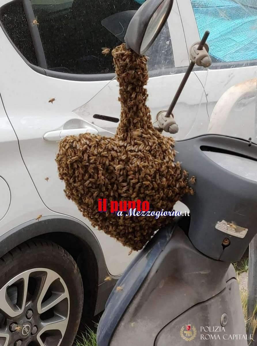 Sciame di api sceglie lo scooter come alveare
