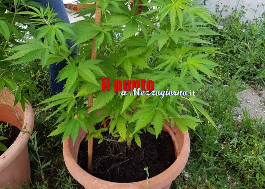 Coltivava marijuana nei vasi di gerani a Fiuggi, arrestato 31enne