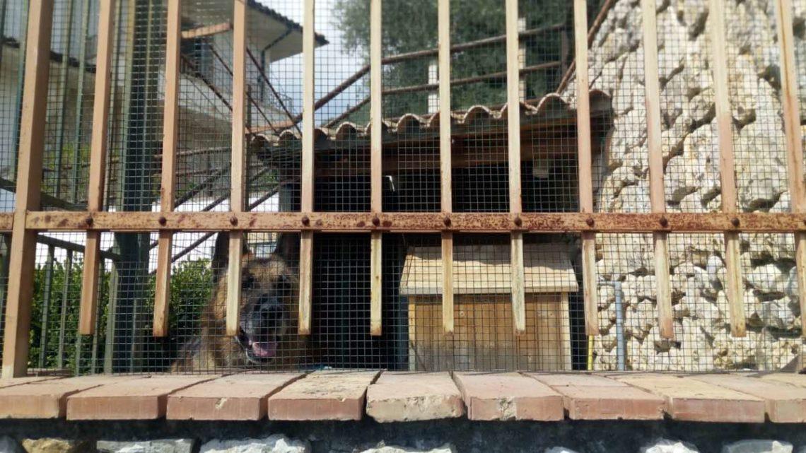 Aggredito e ucciso dal cane a Fondi, il 60enne aveva le chiavi del cancello