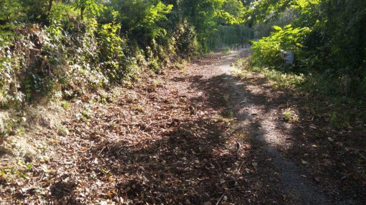 Via Muraglie a Sant'Apollinare, la strada di Kesserling tra incuria e abbandono