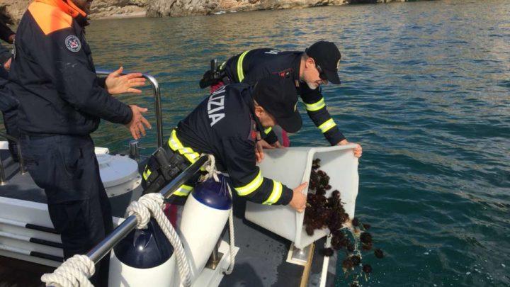 Sequestrati sull'A1 a Cassino 2.200 ricci di mare, denunciati due baresi