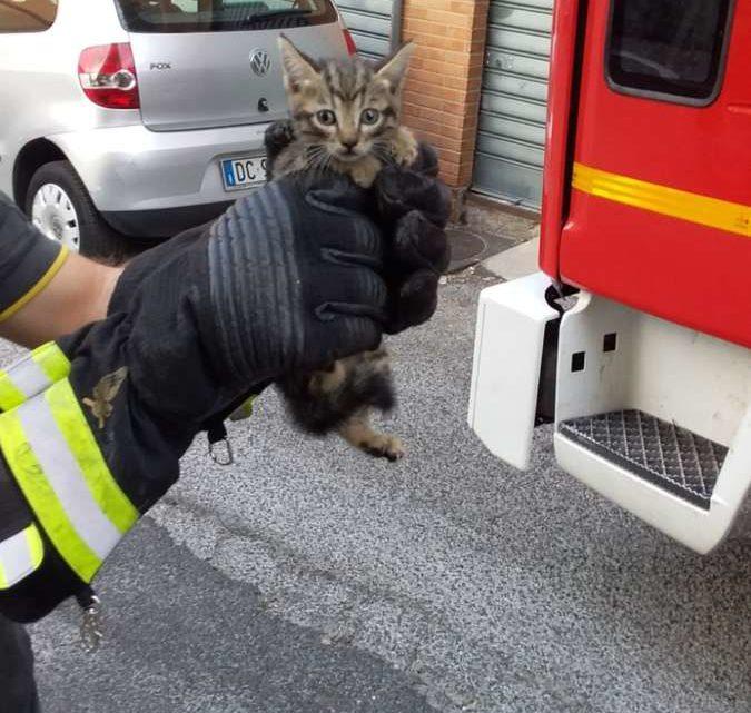 Cade in un lucernaio e rimane incastrato, gattino salvato dai vigili del fuoco di Velletri