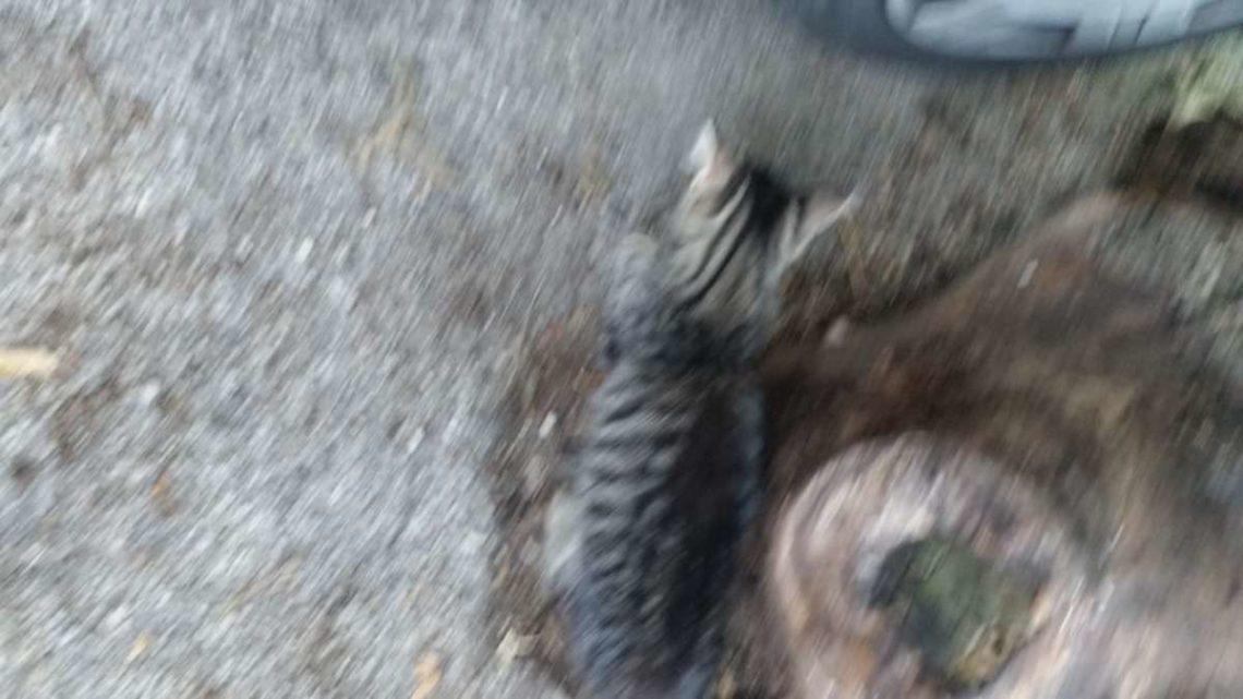 Misteriose morti di cani e gatti a Castelnuovo Parano, ipotesi avvelenamento