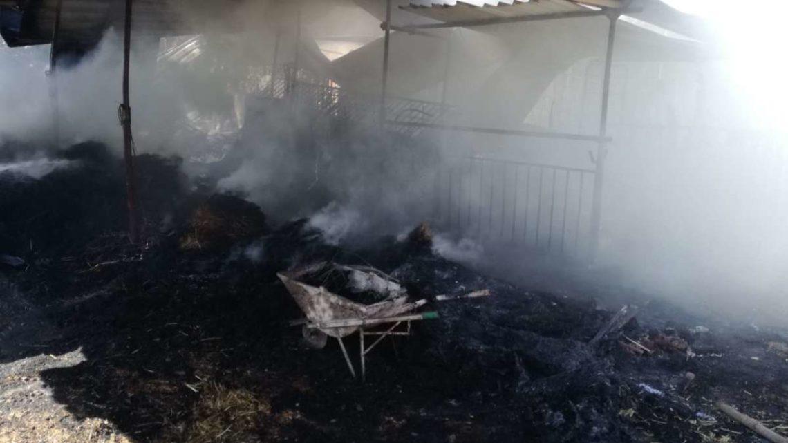 Incendio sterpaglie arriva alla stalla delle capre, è strage