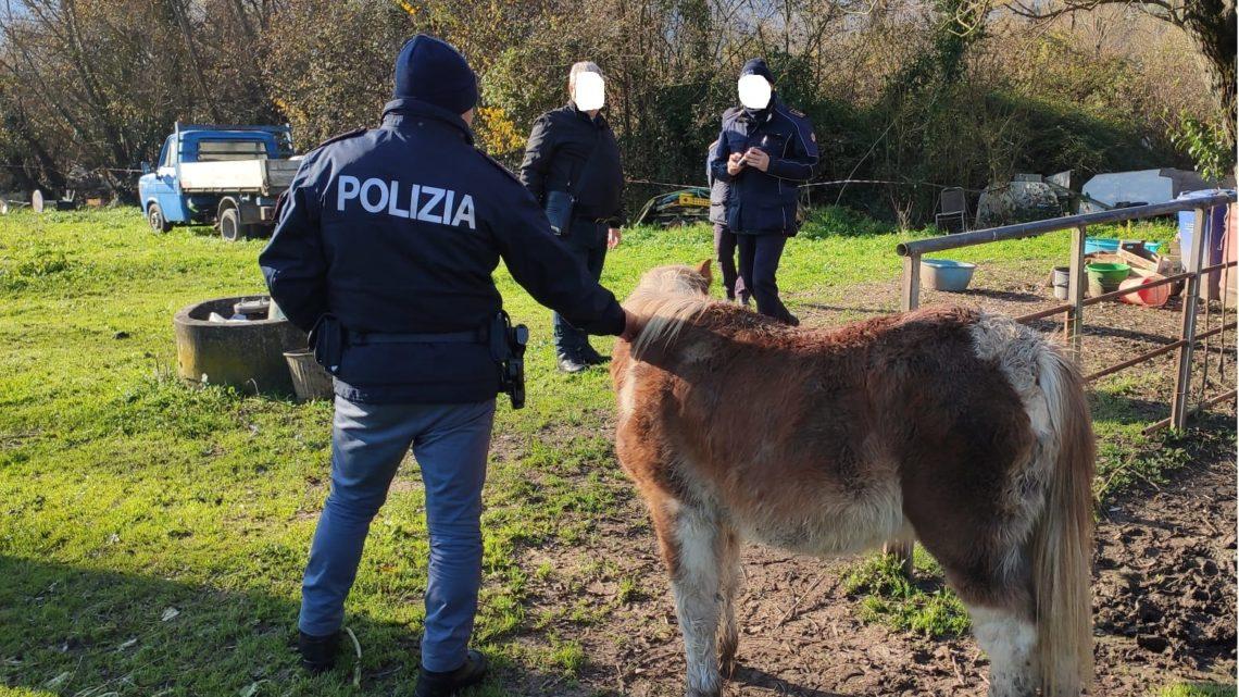 Animali in condizioni disumane a Cassino, intervengono polizia, polizia Provinciale e Asl