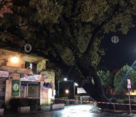 Maltempo ai Castelli, abbattuta la quercia secolare di Lariano mentre a Velletri il vento stacca coperture dai tetti