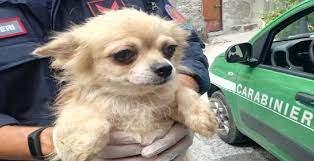Trenta cani e 10 gatti tenuti in pessime condizioni, due donne denunciate a San Giorgio a Liri