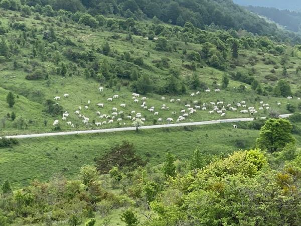 Pascolo abusivo nel cuore del Parco e carcasse abbandonate in un SIC: continuano i controlli a tutela di fauna selvatica e bestiame domestico