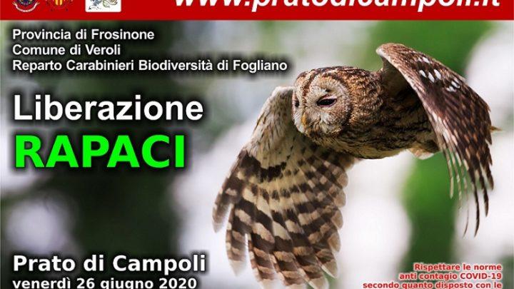 A Prato di Campoli i rapaci tornano in libertà
