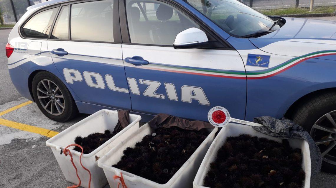 Cassino – La Polizia Stradale intercetta pescatori di frodo e recupera una ingente quantità di ricci di mare