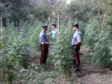 Piantagione di marijuana scoperta dai carabinieri, 167 piante sequestrate a Roma