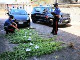 Coltivava marijuana, 50enne arrestato a Roccasecca